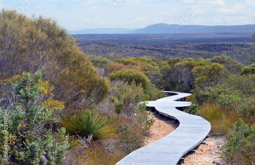 Boardwalk walking track through woodland at Wattamolla, Royal National Park, NSW Tablou Canvas