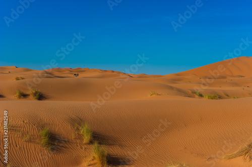 Foto op Canvas Blauwe jeans Camel caravan in Erg Chebbi Desert, Sahara Desert near Merzouga, Morocco