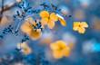 Leinwandbild Motiv Verblühte Hortensien im Gegenlicht