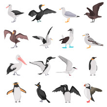 Different Sea Birds Color Flat Icons Set