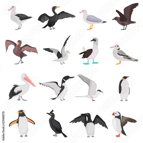 Fotografia, Obraz  Different sea birds color flat icons set