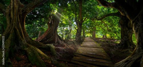 Spoed Foto op Canvas Weg in bos Asian tropical rainforest
