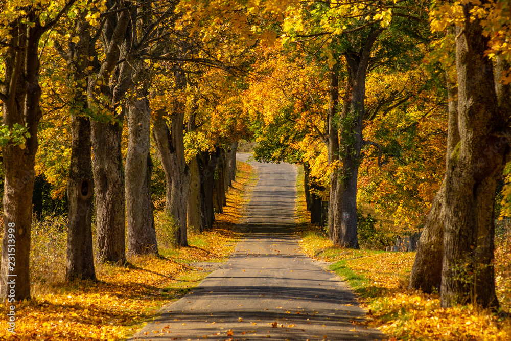 Fototapety, obrazy: Autumn landscape road with colorful trees . Bright and vivid autumn foliage with country road
