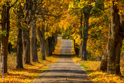 Autumn landscape road with colorful trees Wallpaper Mural
