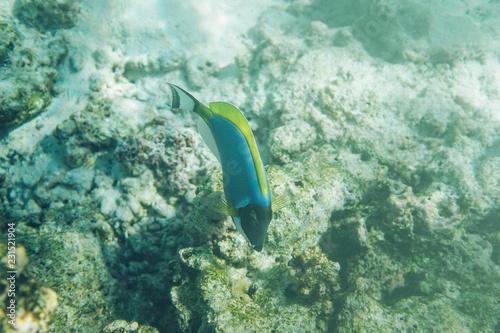 Staande foto Koraalriffen Corals reef