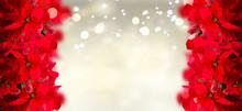 Scarlet Poinsettia Flowers Or Christmas Star Borders On Festive Silver Background