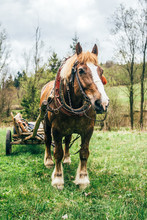 Draught Horse With Cart