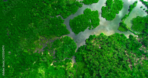 Foto op Plexiglas Groene Aerial view of mangrove forest and river on the Siargao island. Philippines