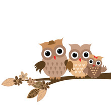 Cute Owls Family On White Back...
