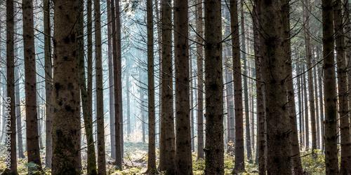 Papiers peints Foret brouillard Wald zwischen Trossingen und Deisslingen