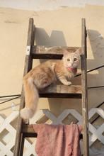 Gato En Escalera