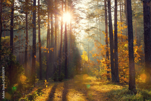 Foto op Plexiglas Bos Bright golden sunbeams