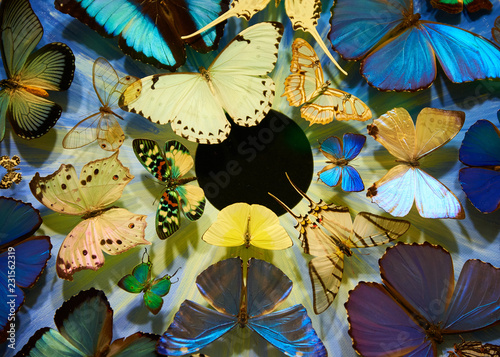 Fototapety, obrazy: colorful butterflies