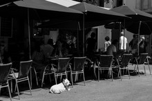 Dog In A Cafe