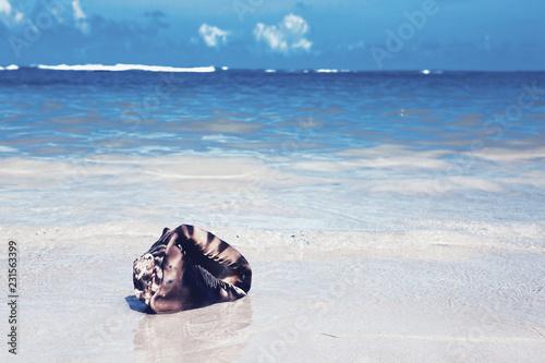 Poster Oceanië Sea shell on tropical beach. Travel background.