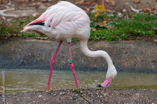 Tuinposter Flamingo Flamingos