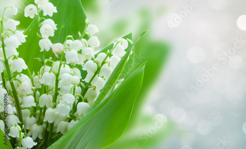Wall Murals Lily of the valley lilly of the valley flowers on gray bokeh banner with copy space