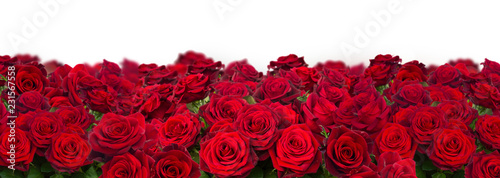 bouquet of dark red roses wide banner isolated on white background