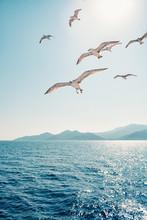 Seagulls Soaring In Open Sky