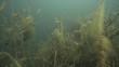 Unterwasserlandschaft 24