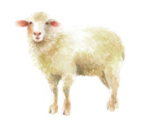 Watercolor Isolated Illustration Of A Lamb Or A Sheep, Hand-painted Pet Paints, Farm Livestock And Domestic Animal