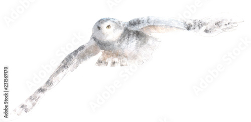 watercolor isolated illustration of white polar owl, drawing of north animal of antarctic, arctic and north pole, drawn by paints on white background
