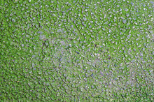 Stone Wall Covered With Algae As A Background