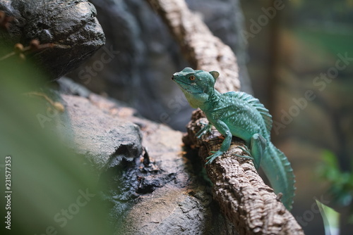 Photo  lizard on a branch