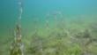 Unterwasserlandschaft 31