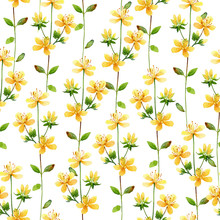Seamless Floral Pattern With Hypericum Flowers