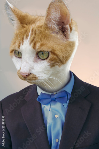 Spoed Fotobehang Hipster Dieren Cat Businessman Funny