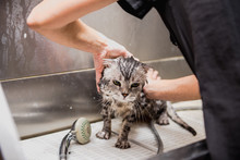 Professional Cat Grooming In T...