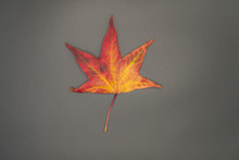 Texture Of Dry Red And Yellow Autumn Leaf.