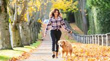 Woman Walking Golden Retriever...