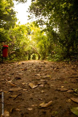 Spoed Foto op Canvas Weg in bos barra da tijuca