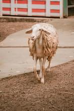 Dirty Sheep Walk.