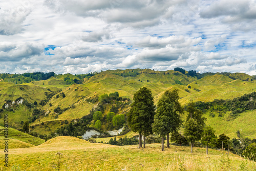Foto op Aluminium Oceanië New Zealand nature farmland green valley landscape with trees. Travel destination.