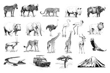 Set Of Many African Animals And Car, Tree, Mountain Hand Drawn Illustrations