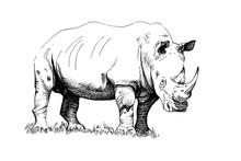 Rhino Hand Drawn Illustrations