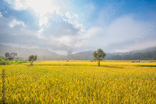 Fotobehang Cultuur Rice field with mountain background in the morning