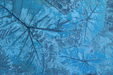 Pattern Of Leaf Stamped On Blu...
