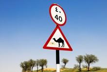 Attention Camel Shield, Ras Al...