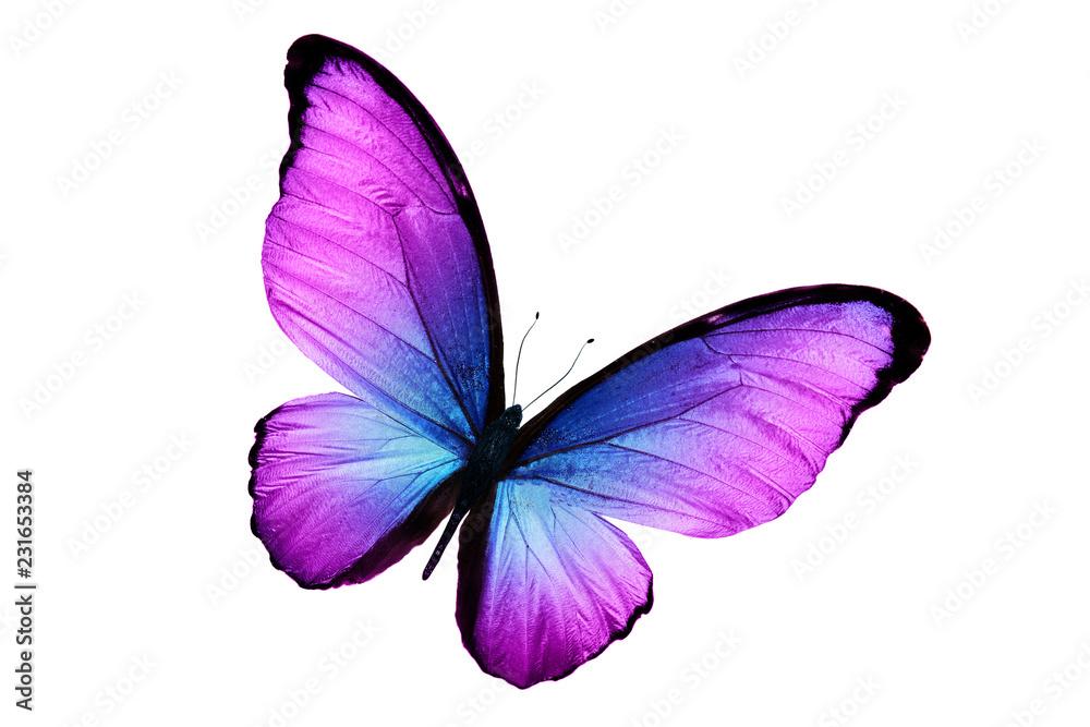 Fototapeta beautiful purple butterfly isolated on white background