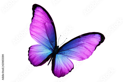 beautiful purple butterfly isolated on white background Wallpaper Mural
