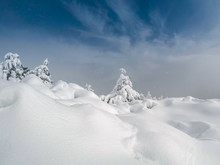 Snow Covered Trees In Mountains