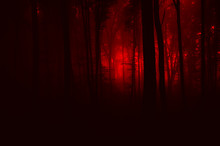 Horror Landscape, Scary Forest In Mysterious Red Light