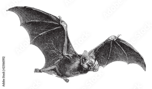 Foto Vampire-Bat (Vampirus spectrum) / vintage illustration from Meyers Konversations