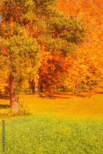 Deurstickers Herfst Autumn scene with Golden leaves, Autumnal trees, meadow, blue sky and sun shining beams. Beautiful Countryside landscape
