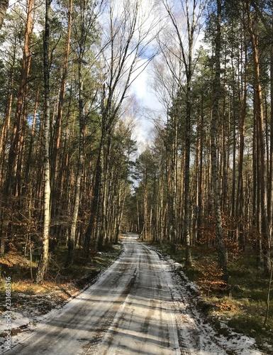 Spoed Foto op Canvas Weg in bos las drzewa natura