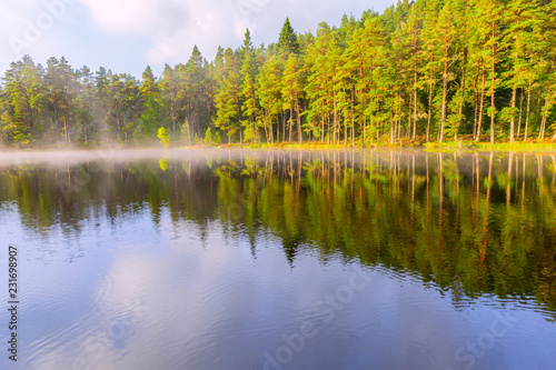 Foto op Aluminium Meer / Vijver Beautiful landscape scene with pine forest reflected in calm lake hazy water in the morning